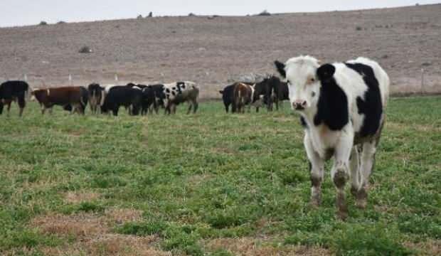 Müteahhitliği bıraktı, hayvan çiftliği kurdu