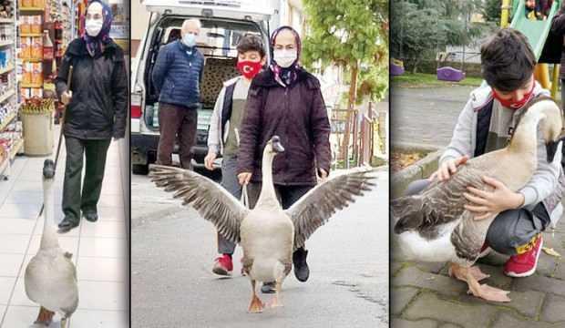 Hediye kaz Trabzon'un maskotu oldu!