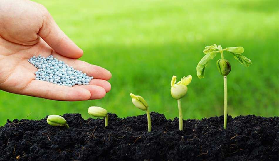 Tohum nedir ve tohum çimlenmesi nasıl gerçekleşir? Tohum yetiştirmenin püf noktaları
