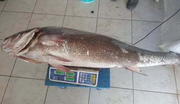 1,5 metre boyunda ve 22 kilogram ağırlığındaki levrek görenleri şaşırttı