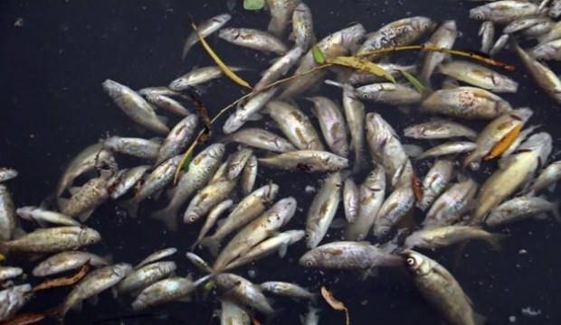 Binlerce balığın ölümüyle ilgili 4 tesise ceza yağdı