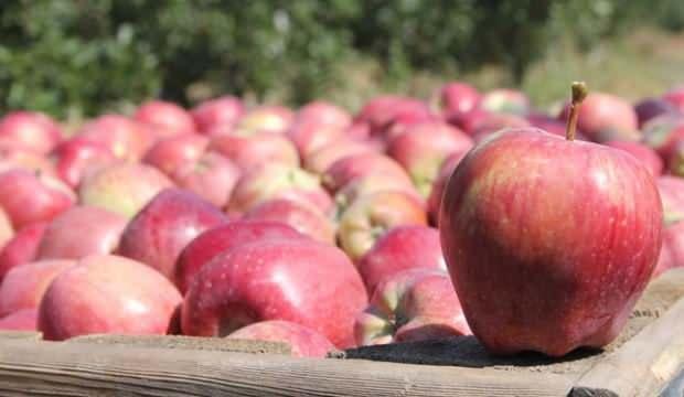 Elma kuraklık dinlemedi, ihracat üçe katlandı
