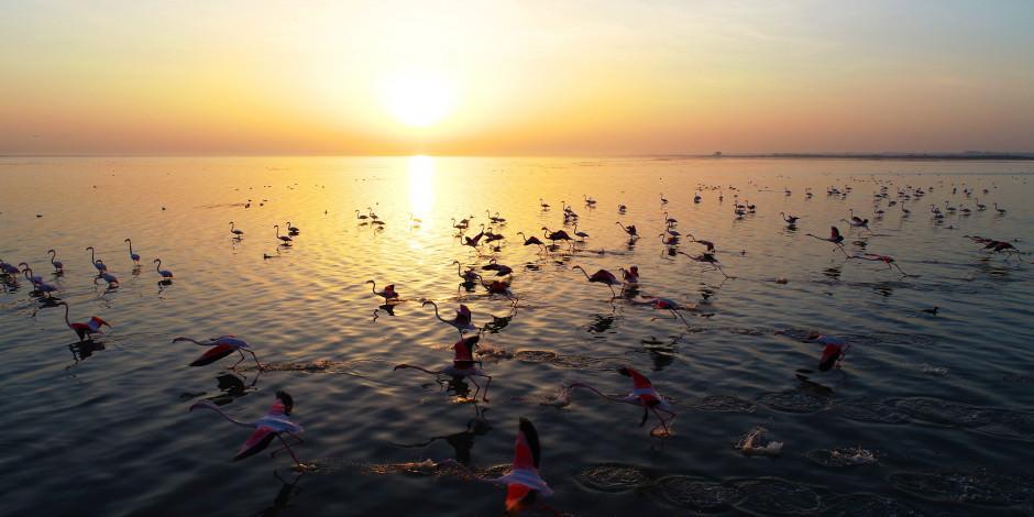 Akyatan Lagün'ü flamingolarıyla fotoğraf tutkunlarını cezbediyor!