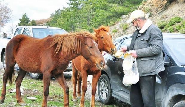 Çocuklarım dediği yılkı atlarını elleriyle besliyor