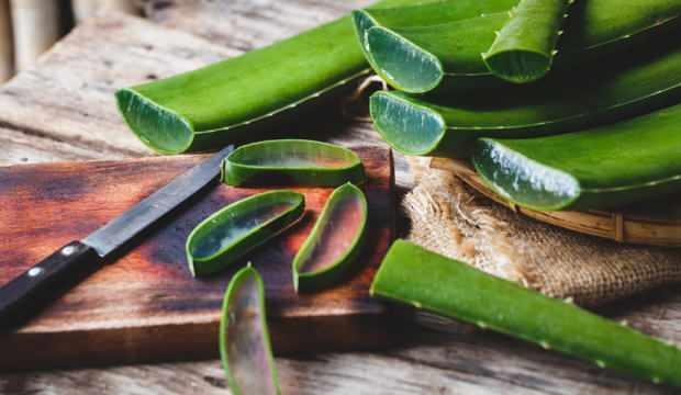 aloe veranın cilde faydaları ile ilgili görsel sonucu