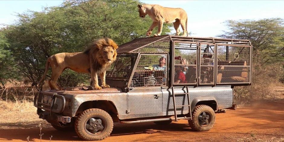 Bu doğal yaşam parkında insanlar kafese giriyor!