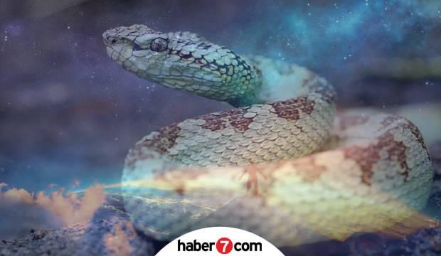 Rüyada yılan görmek nasıl yorumlanır? Rüyada evde yılan beslemek neye işarettir?