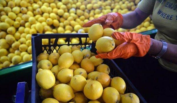 Türkiye'den ocak ayında 31,4 milyon dolarlık limon ihraç edildi