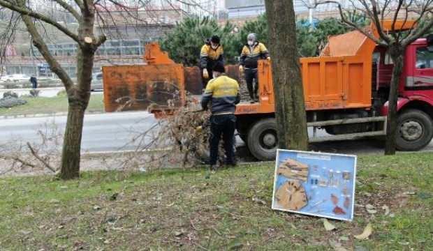 İstanbul'un teke böceği tehlikesi