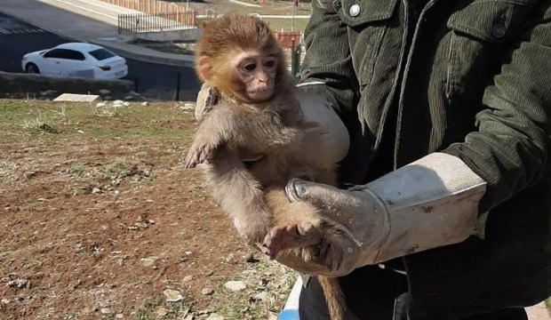 4 örümcek maymunu sınırda kurtuldu!