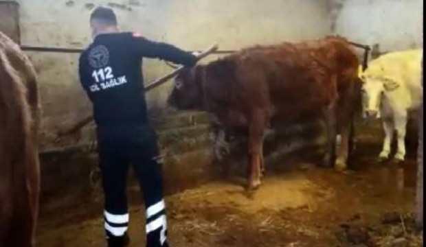 Karantinadaki yaşlı kadının ineklerini 112 ekipleri besledi