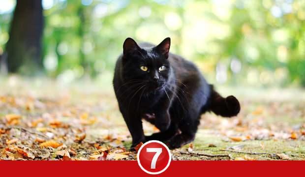 Rüyada siyah kedi görmek neye işaret? Rüyada siyah kedi ısırması ne demek?