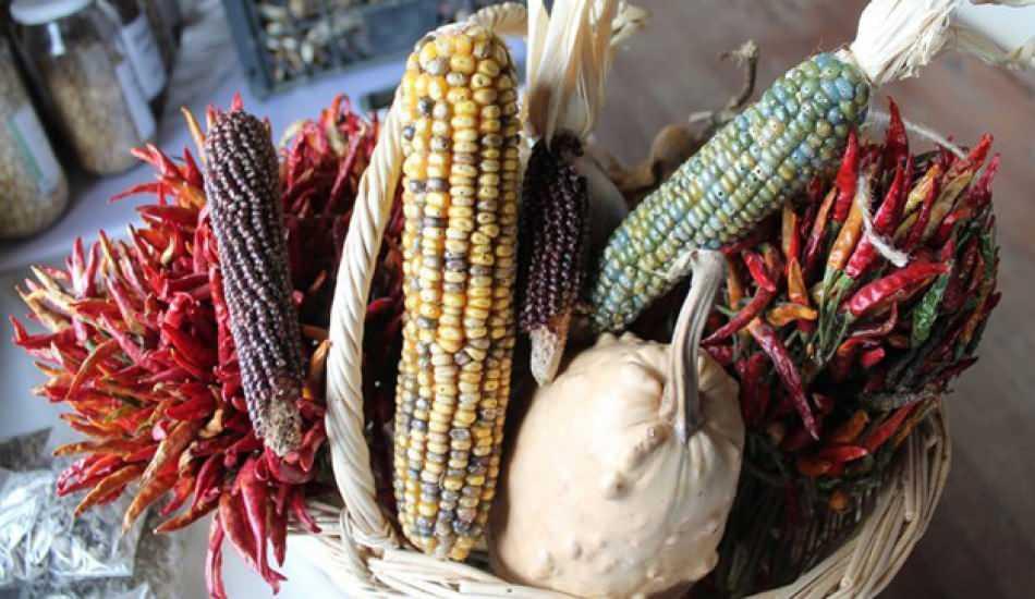 Ata tohumu nedir? Ata tohumu ne işe yarar? Yerli atalık tohum neden önemli