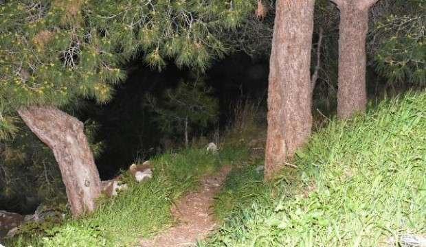 Ormanlık alandaki kafatası ve kemikleri, define arayanlar bulmuş