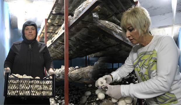 Eşini kaybetti, 4 çocuğu için girişimci oldu! Yılda 15 ton mantar üretiyor