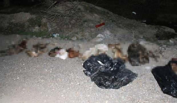 Başkentte çöp poşetlerinde çok sayıda ölü köpek bulundu