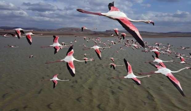 Türkiye'deki flamingoların muhteşem görüntüsü