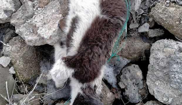 Vahşet kokuyla ortaya çıktı! 70'e yakın köpek ölüsü bulundu