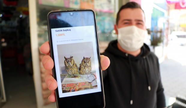 Yasak olmasına rağmen internetten o hayvanların satışına devam ediliyor