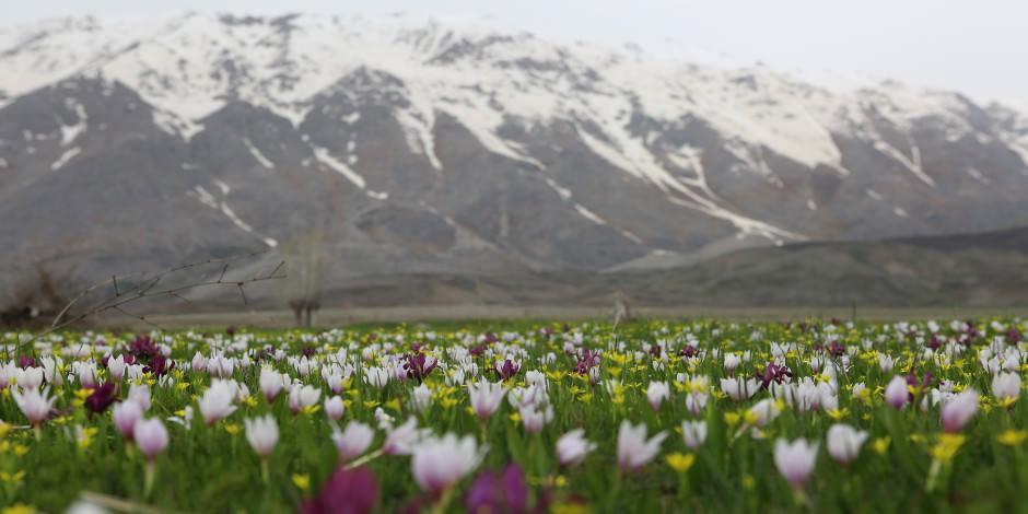 Munzur Dağları'nın etekleri baharla şenlendi