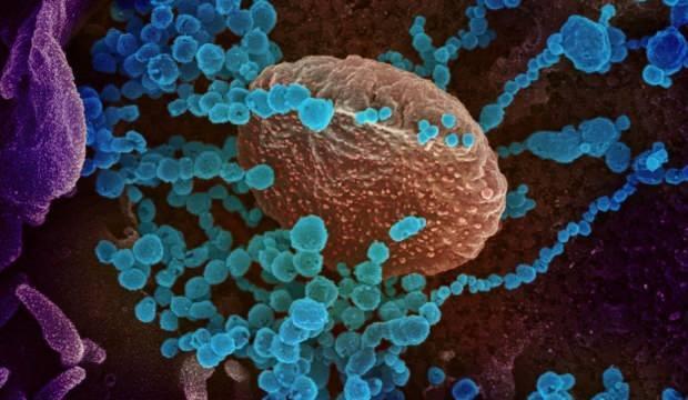 Bir kişide 2 mutant virüs birden görüldü! 52 katlı rezidans karantinada