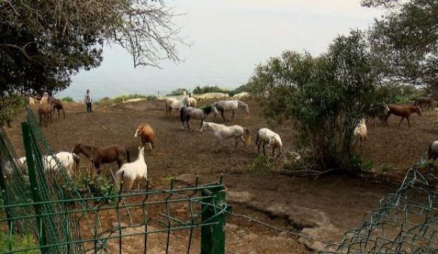 Hatay'daki kayıp atların çiplerini çıkardığı iddia edildi, evinde inceleme yapıldı
