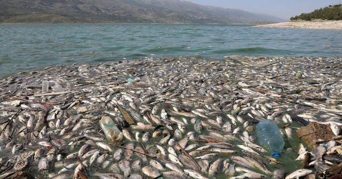 Lübnan'da tonlarca balık baraj göletinde telef oldu