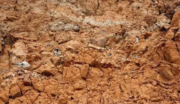 1 milyar yıllık fosil keşfedildi! En eskisi olabilir