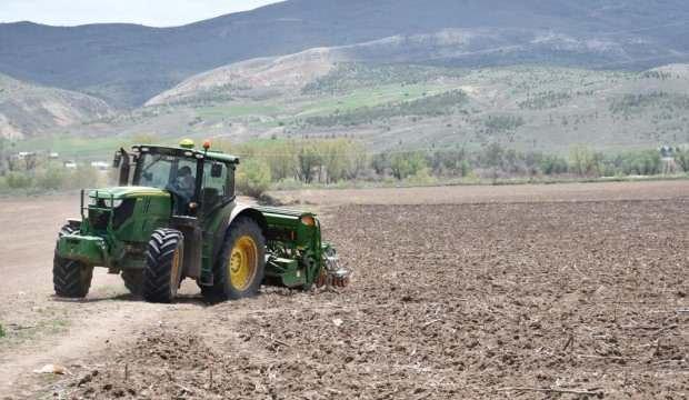 Sivas'ta ilk kenevir tohumları toprakla buluşturuldu