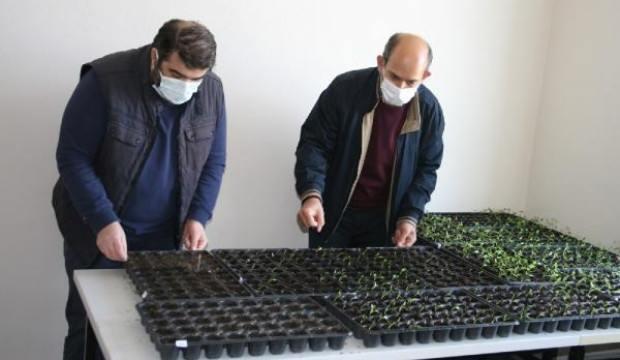 Osmanlı'da efsane renk olarak bilinen bitki Edirne'de yetiştirilecek!