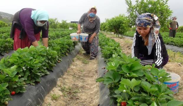 Mersin'de üretiliyor dünyaya satılıyor