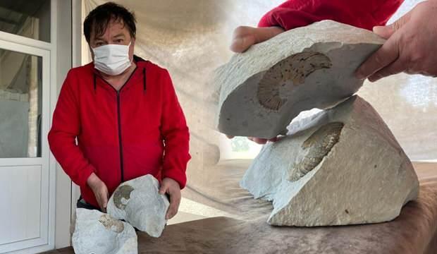 Ordu'da emekli öğretmen 65 milyon yıllık fosil bulduğunu iddia ediyor!