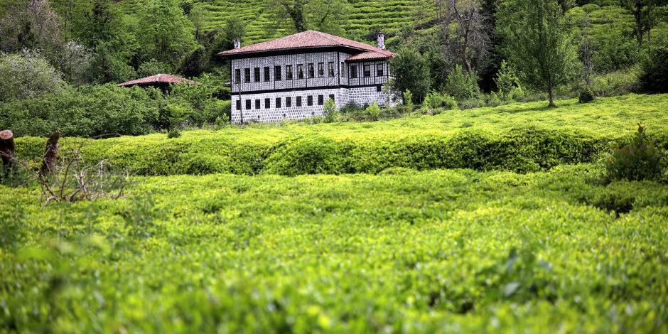 Rize'nin çay bahçelerinden muhteşem manzaralar