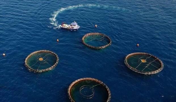 Türkiye'nin 4 aydaki su ürünleri ihracatı 400 milyon doları aştı