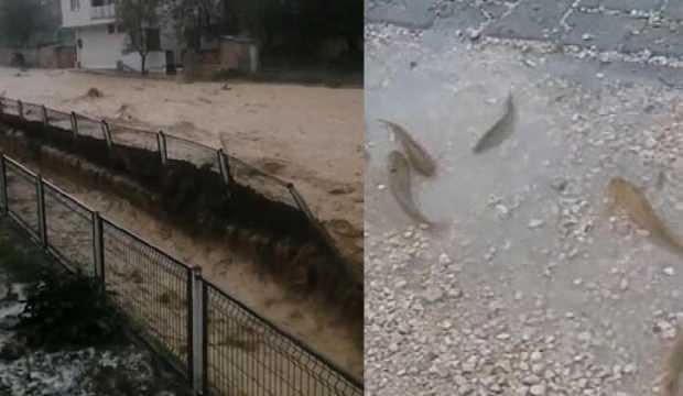 Yağmur dereyi taşırdı, balıklar yola saçıldı