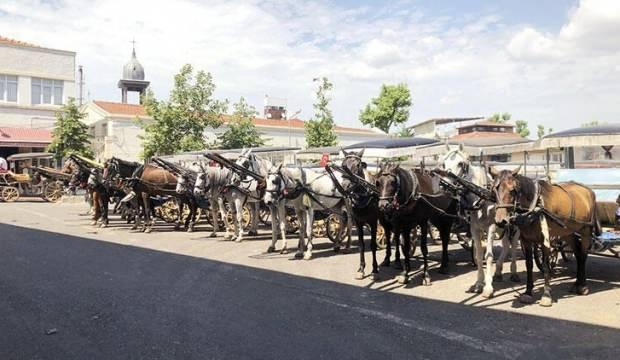 Şimdi de kayıp atlar Kuzey Irak'ta iddiası