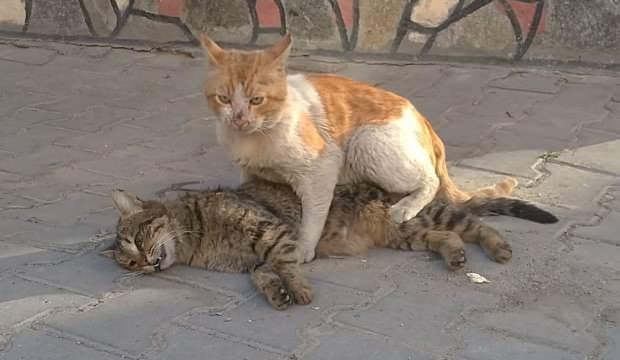 Arkadaşının başında nöbet tuttu, kediden insanlık dersi