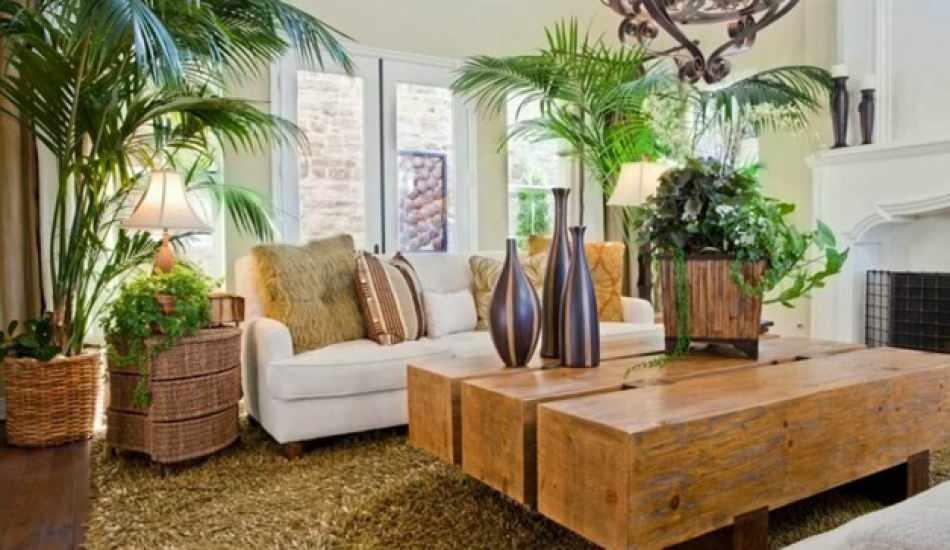 Evin havasını temizleyen bitkiler nelerdir? Evde hangi çiçekler faydalı?