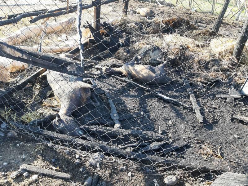 Yangında 9 koyun ve 10 tavuk telef oldu