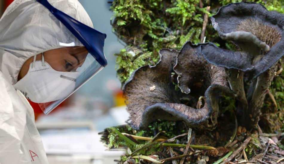Kara mantar hastalığı neden olur? Kara mantar hastalığının belirtileri nelerdir?