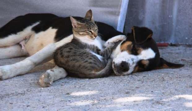 Kedi ile köpeğin gülümseten dostluğu