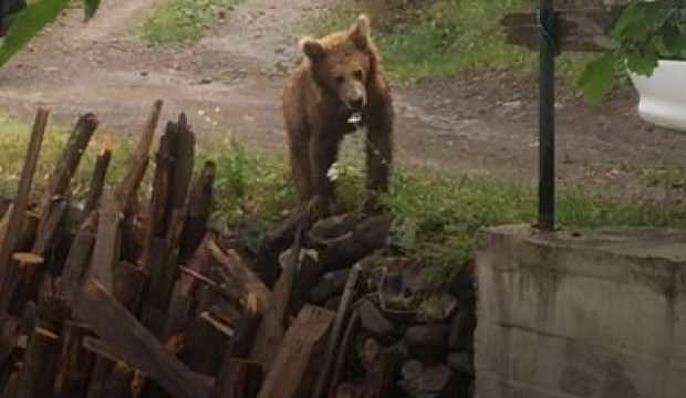 Köye inen ayı ile özçekim yaptı!