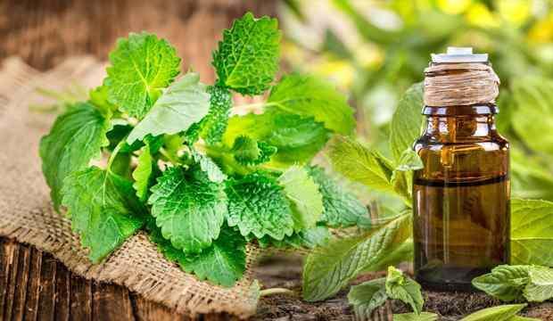 Nane yağının faydaları nelerdir? Nane yağı cilde nasıl kullanılır?