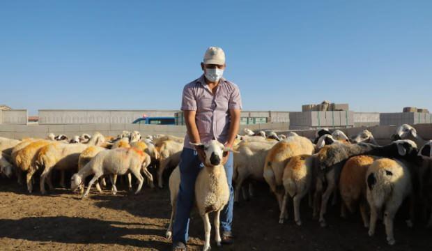 Aksaray Valisi'nden 100 koyunlu bayram sevinci