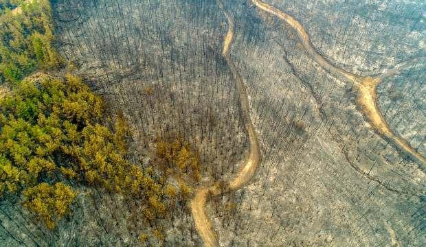 Yanan orman alanlarına dokunursak daha çok zarar veririz