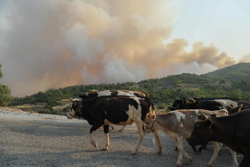 Son dakika: Muğla'daki yangınlarda şoke eden gerçek ortaya çıktı! Çok sayıda tutuklama var