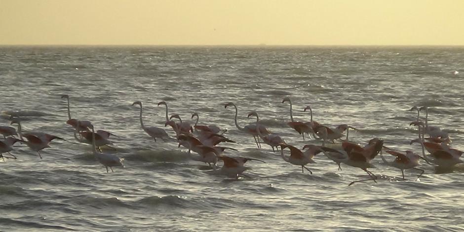 Van Gölü Havzası'nda flamingolardan görsel şölen