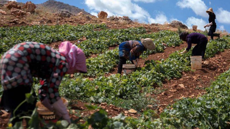 Lübnan verimli topraklara sahip olsa da, ülkede gıda sıkıntısı yaşanıyor.