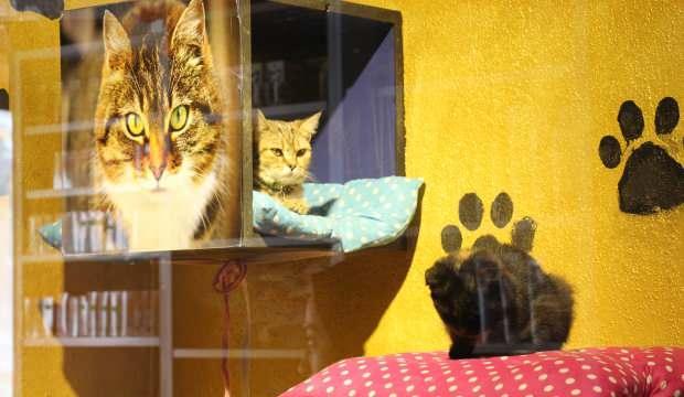 Bitlis'te bu pansiyonun sakinleri kediler