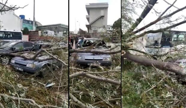 Kocaeli'de şiddetli rüzgar ağaçları devirdi, araçlarda hasar oluştu